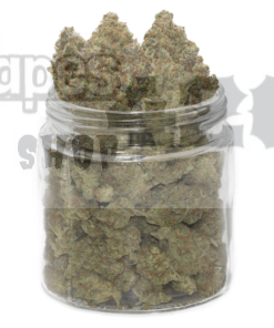 dr. who strain